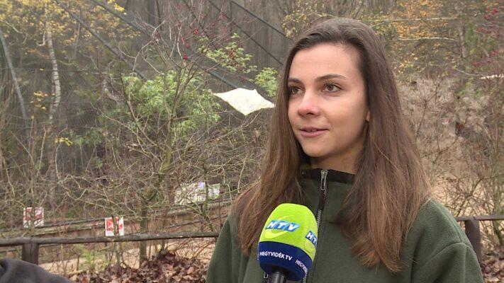 Online nyitva tartás a Budakeszi Vadasparkban