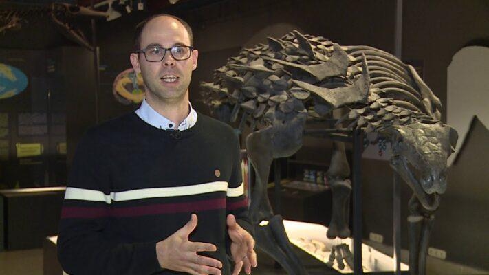 Páncélos dinoszaurusz csordák a Bakonyban