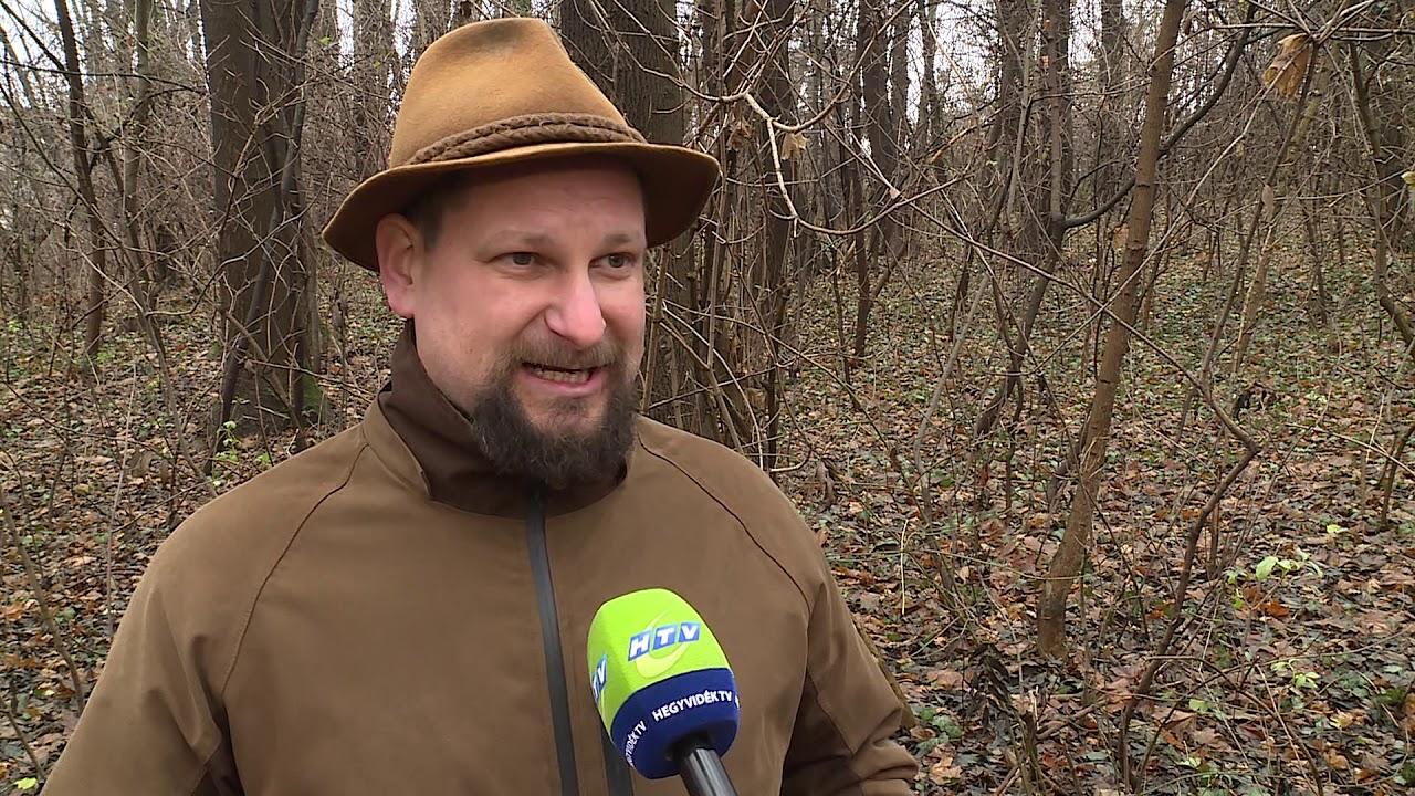 Rekordszámú kiránduló kereste fel idén a főváros környéki erdőket - Hírek 2020. december 16.