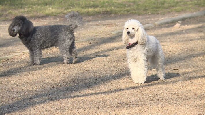 Kutyatartóknak indít online képzést a NÉBIH